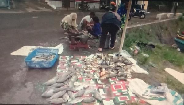 Puluhan Ton Ikan KJA Waduk Darma Kuningan Mati Mendadak