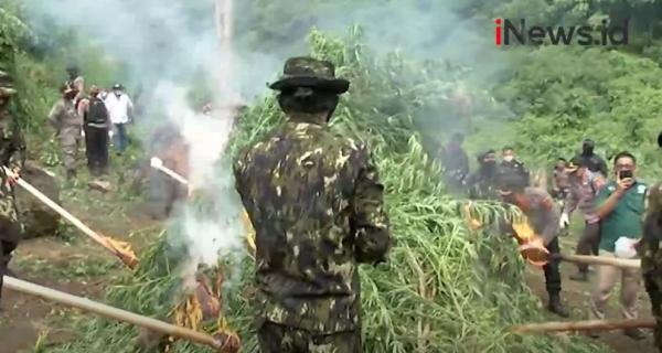 Video 2 Ladang Ganja di Aceh Besar Dimusnahkan BNN