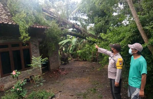 Rumah Warga Kulonprogo Rusak Berat Tertimpa Pohon Tumbang