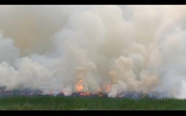 Lahan Gambut di Ogan Ilir Terbakar, Asap Pekat Membumbung Tinggi