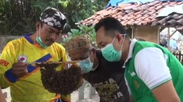 Kreatif, Pemakaman di Tegal Ini Dijadikan Lokasi Budi Daya Lebah