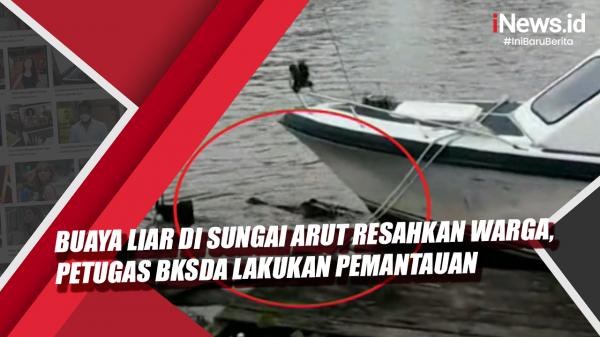 Video Buaya Liar di Sungai Arut Resahkan Warga, Petugas BKSDA Lakukan Pemantauan