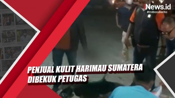 Video Penjual Kulit Harimau Sumatera Seharga Rp15 Juta Dibekuk Petugas di Riau