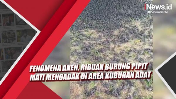 Viral Ribuan Burung Jatuh lalu Mati di Lahan Kuburan, Ini Penjelasan BKSDA Bali