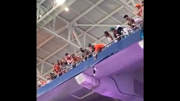 Kucing Alihkan Perhatian Ratusan Penonton, Selamat setelah Jatuh dari Tribun Atas Stadion