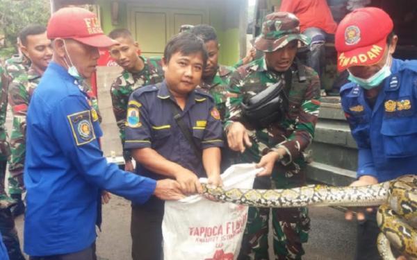 Ngeri, 2 Ekor Ular Piton Muncul saat Banjir di Rangkasbitung