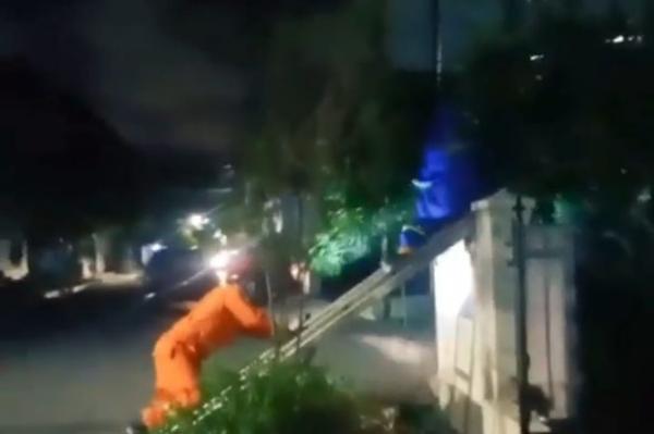 Begini Aksi Petugas Damkar Evakuasi Sarang Tawon saat Tengah Malam