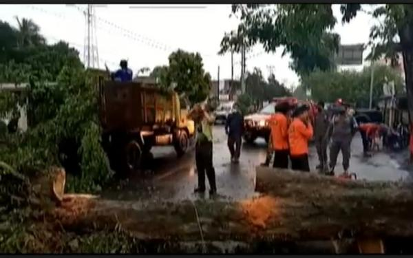 Pohon Tumbang Tutup Jalan Kompleks Rumas Dinas Pemkab Lahat