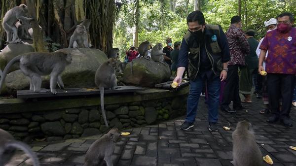 Erick Thohir Berikan Bantuan Pakan untuk 1.200 Kera Penghuni Monkey Forest