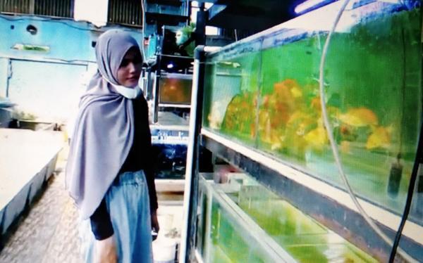 Warga Klaten Ini Sukses Budi Daya Ikan Hias di Tengah Pandemi, Raup Omzet Rp30 Juta per Hari