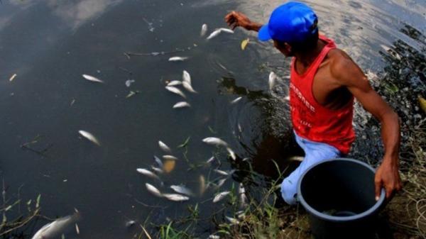 Ikan di Sungai Nagan Raya Mati Mendadak, Diduga akibat Pencemaran Lingkungan