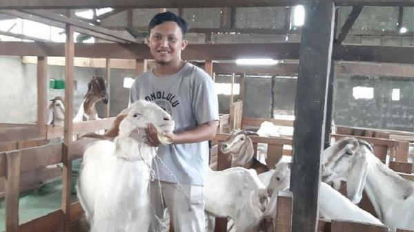 Pulang Kampung Selama Pandemi, Mahasiswa IPB asal Kalbar Ternak Kambing Omset Rp400 Juta