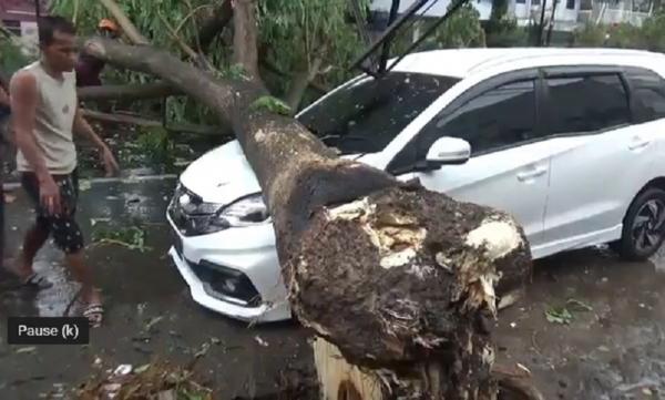 Selain Timpa Mobil, Pohon Tumbang Juga Terjadi di 10 Lokasi Ini