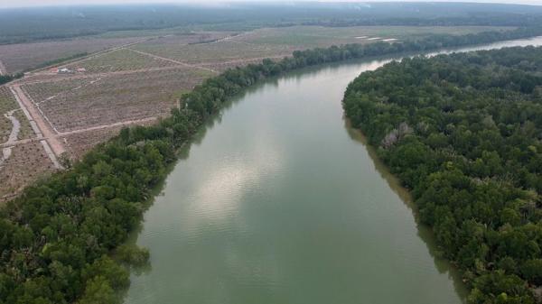 Rp4,8 Miliar Dikucurkan untuk Penataan Kawasan Mangrove di Singkawang dan Mempawah