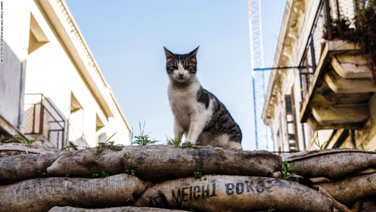 Bunuh 100 Kucing Milik Orang Lain, Pria Jepang Dihukum