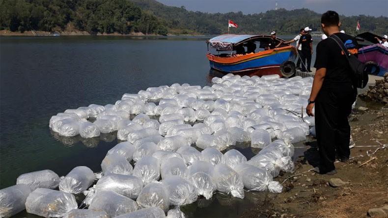 Sejahterakan Warga Kawasan Waduk Sermo, BKIPM Tebar 1,2 Juta Benih Ikan Tawes