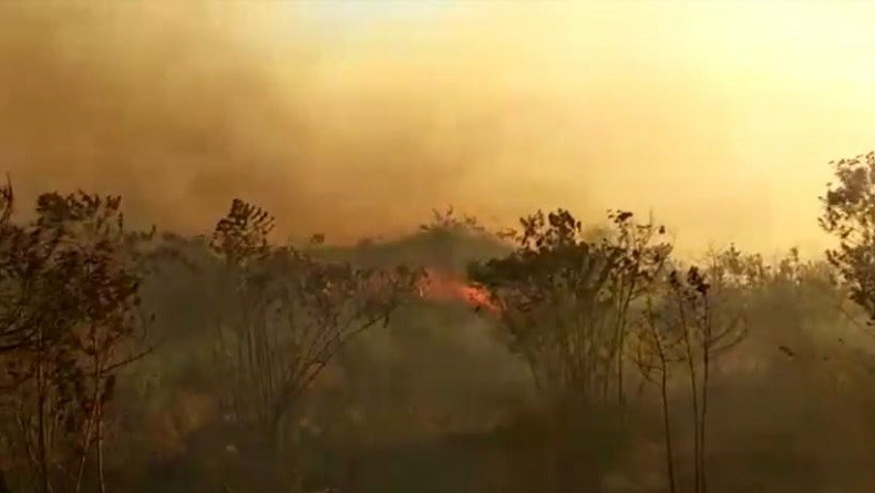 Pemadaman Kebakaran Hutan di Gunung Arjuno Terkendala Angin Kencang