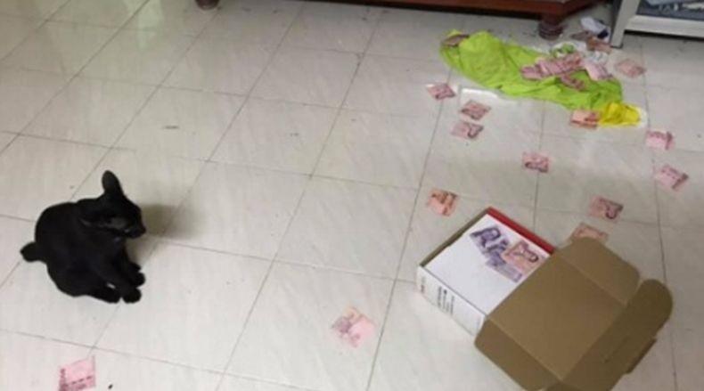 Gara-Gara Kucing, Istri Ungkap Tempat Suami Menyembunyikan Uang