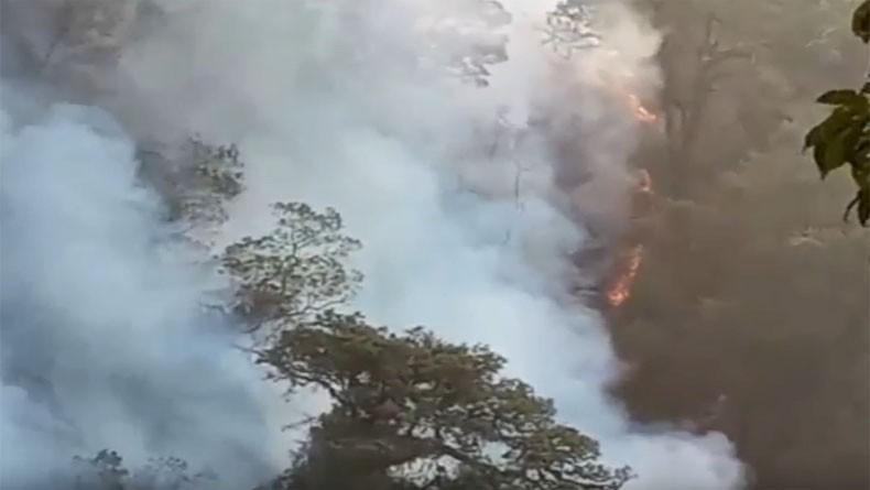 Hutan Gunung Slamet Masih Membara, Tim Gabungan Kewalahan Padamkan Api