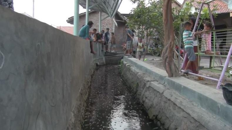 Selokan di Desa Palir Cirebon Jadi Tempat Wisata setelah Ditanami Ikan Hias