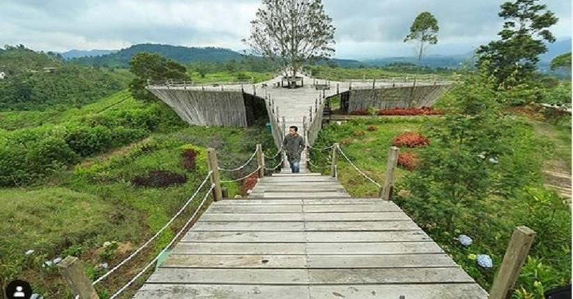 Liburan Tahun Baru Di Bandung Asyiknya Ke Teras Bintang Ciwidey Menikmati Kebun Teh Pegunungan