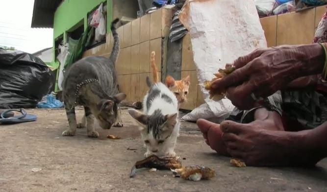 Demi Rawat Belasan Kucing, Nenek di Semarang Rela Tinggal di Tempat Pembuangan Sampah