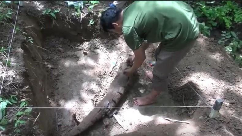 Fosil Gading Gajah Ditemukan di Nganjuk, Diperkirakan Hidup 900.000 Tahun Lalu