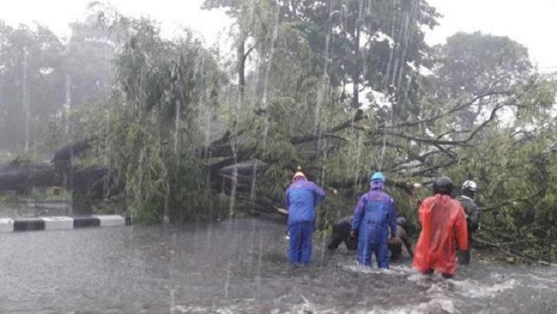 Sleman Dilanda Hujan Lebat dan Angin Kencang, Banyak Pohon Tumbang Menimpa Rumah Warga