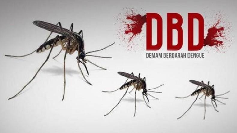 500 Kasus DBD di Tasikmalaya, 11 Warga di Antaranya Meninggal