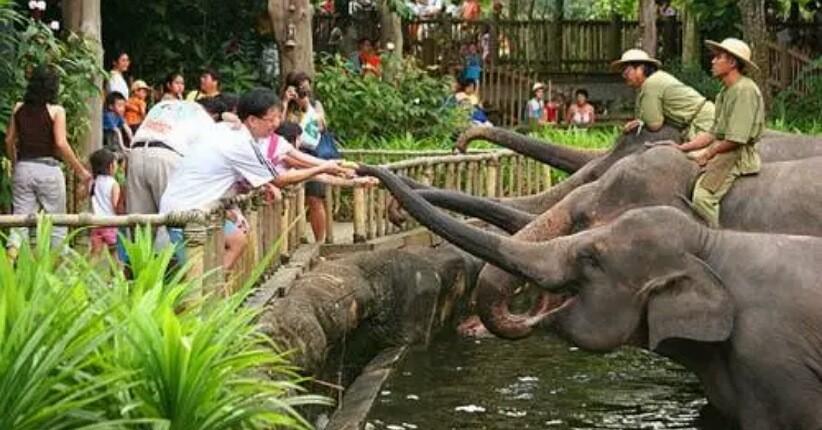 Akibat Pandemi Covid-19, Hewan di Kebun Binatang Kelaparan, Yuk Bantu!