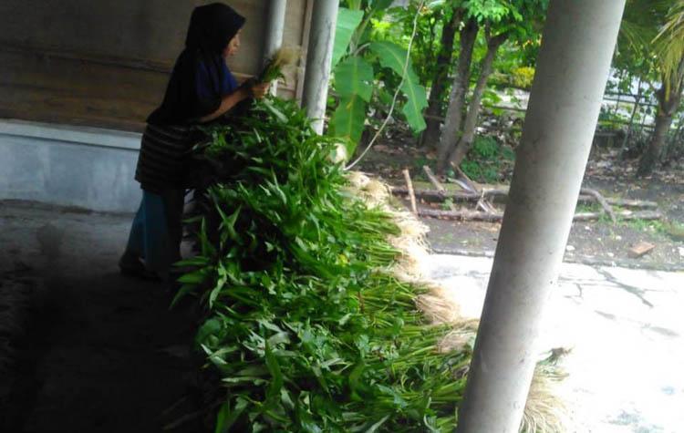 Cukup Bayar dengan Doa, Petani Sayur di Gunungkidul Bagikan Hasil Panen