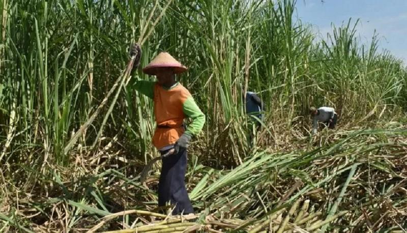 Holding Perkebunan Rombak Direksi 10 Anak Perusahaan Non-PTPN
