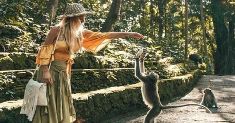 Ide Wisata Alam saat New Normal, Asyik ke Monkey Forest Ubud Lihat Kera Keramat