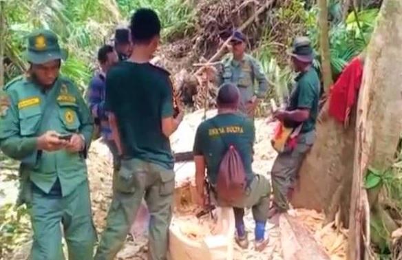 Pembalakan Liar Marak di Konawe Selatan, BKSDA Temukan Perahu dan Balok Kayu