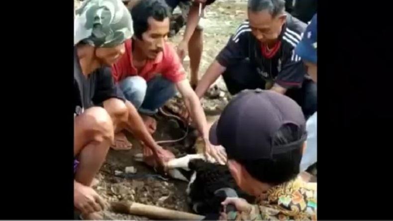 Tukang Jagal yang Tewas di Atas Domba Sempat Sembelih 2 Hewan Kurban