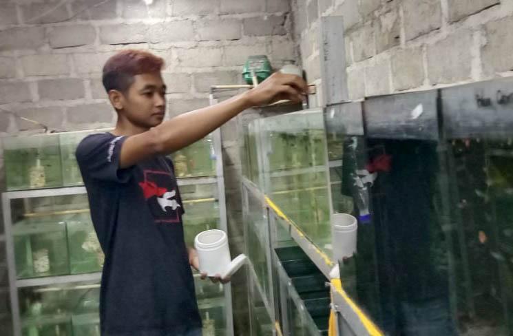 Sukses Kembangkan Ikan Guppy, Kelompok Pemuda di Gunungkidul Beromset Belasan Juta