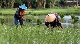 Potensi Indonesia Besar, Pemanfaatan Lahan Pertanian Belum Optimal