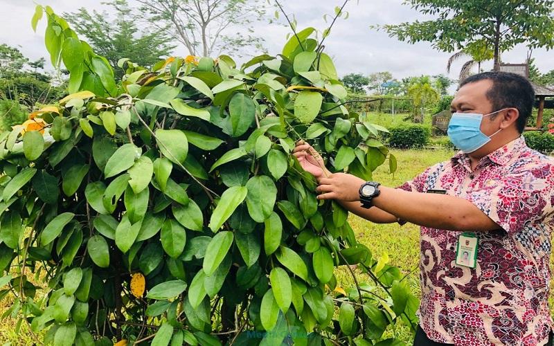 Kebun Raya Banua Kembangkan Tanaman Jenis Obat Khas Kalsel