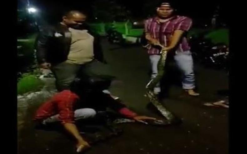 Terekam Video Amatir, Ular Piton 4 Meter Ditangkap Warga Medan di Saluran Air