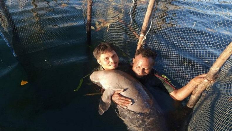 Penampakan Ikan Duyung Temuan Warga Konawe Kepulauan