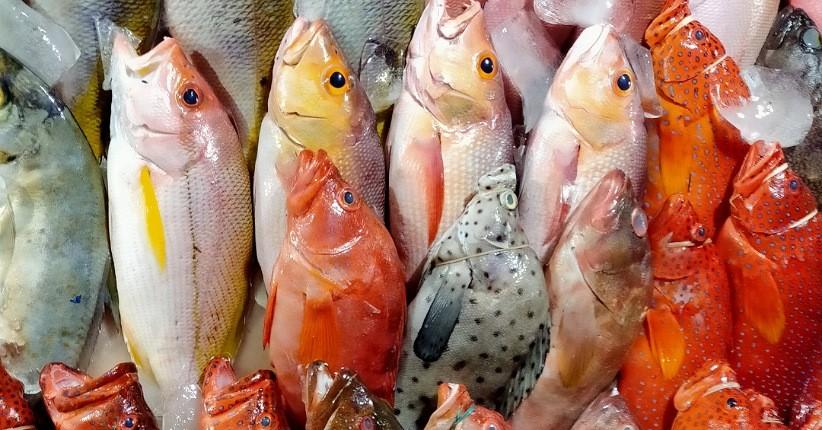 Lezatnya Seafood Segar di Kampung Ujung Labuan Bajo