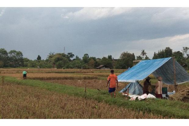 10 Hektare Lahan Pertanian di Tiga Kecamatan Ini Rawan Terendam Banjir