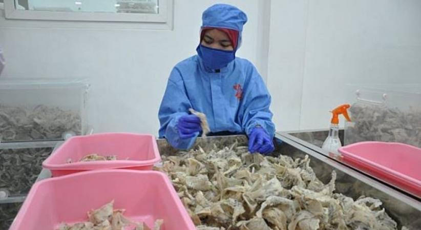 Sumbang Devisa Negara, Ekspor Sarang Burung Walet Tembus Rp28,9 Triliun