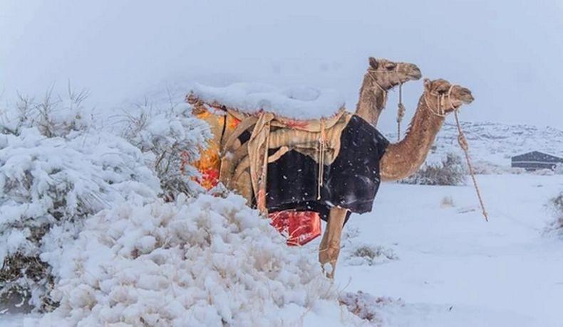 Salju Turun di Tabuk Arab Saudi