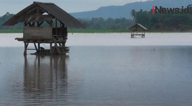 Terendam Air Hujan, 64 Hektare Tanaman Padi di Bantul Terancam Mati