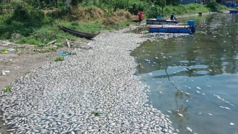 Terungkap, Ini Penyebab Matinya 15 Ton Ikan di Danau Maninjau
