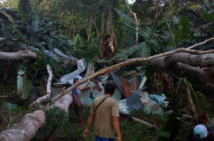 Pohon Beringin Berusia Ratusan Tahun di Gunungkidul Tumbang, Timpa Sarana Pamsimas