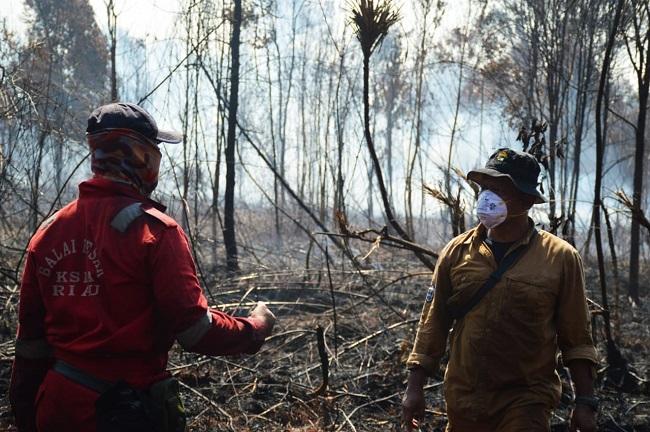 100 Hektare Cagar Biosfer Giam Siak Kecil Riau Hangus Terbakar