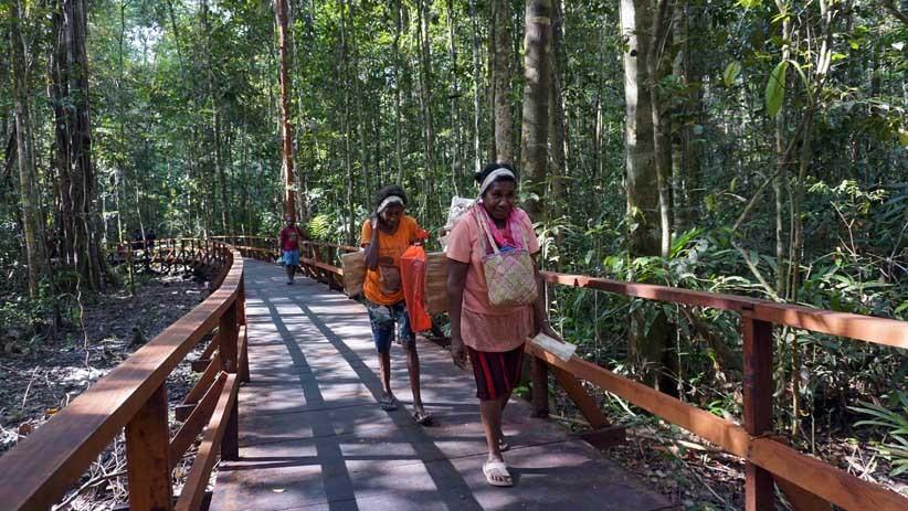 Mengamati Satwa Endemik Papua dari Jembatan Sepanjang 3,2 Km di Hutan Klaso