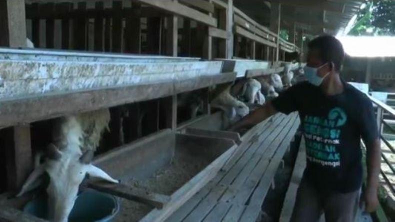 Simak Nih, Warga Desa Ngareanak Tingkatkan Ekonomi dengan Beternak Kambing